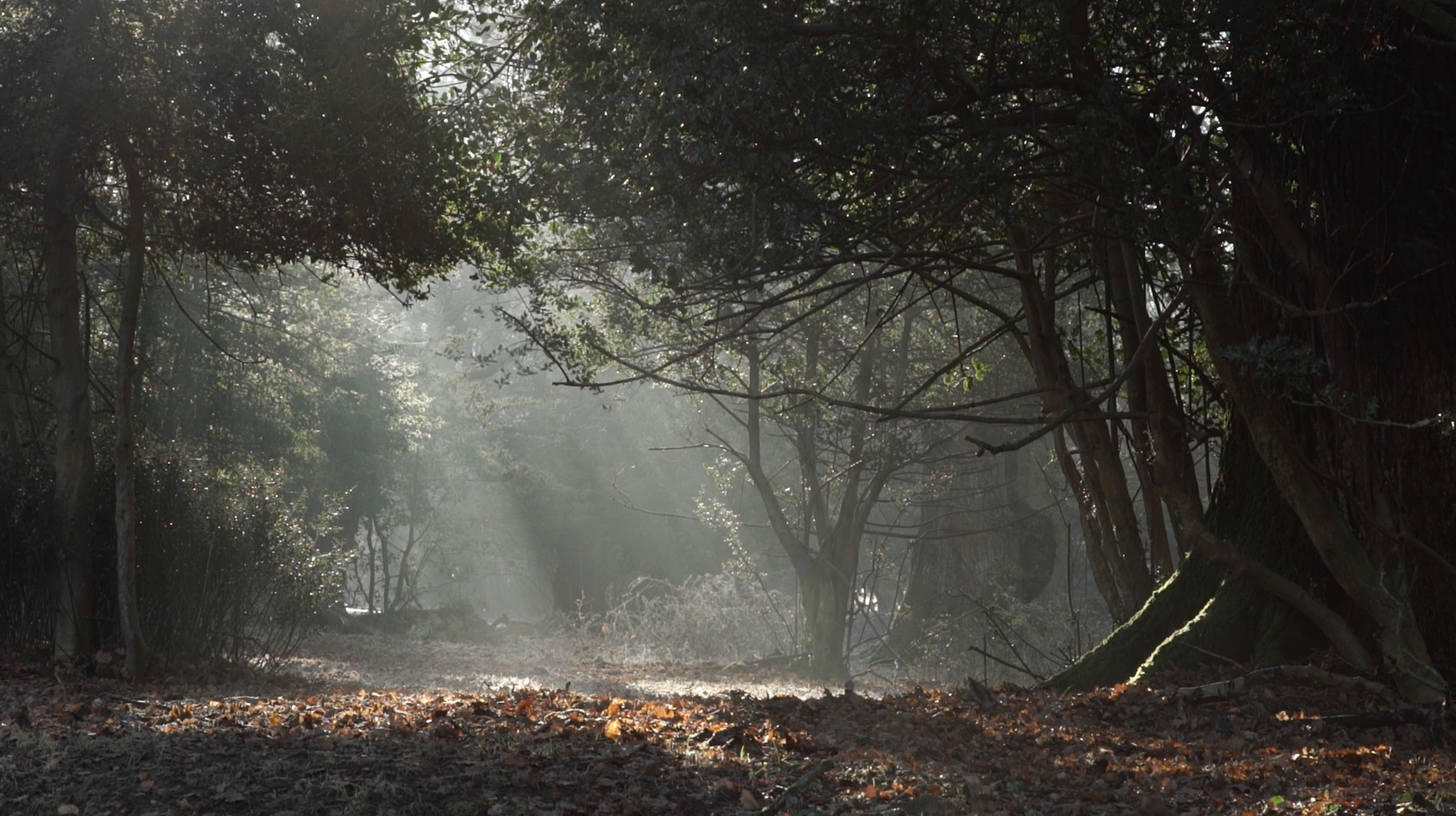 A Year in the New Forest